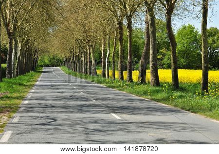 Gazeran France -   the countryside spring