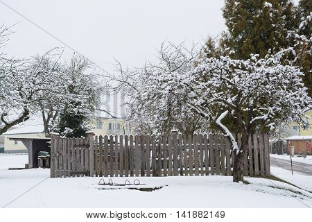 old apple tree used in the winter behind wooden fence