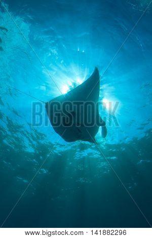 Manta Ray sea sun