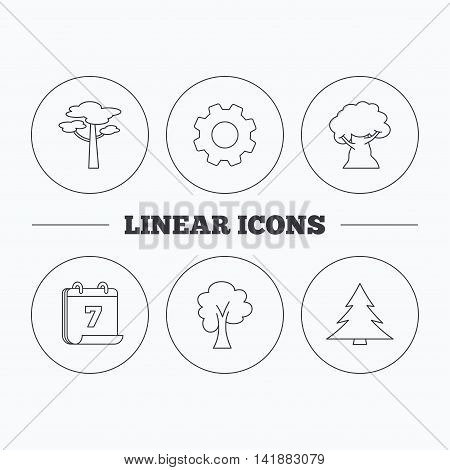 Pine tree, maple and oak-tree icons. Forest trees linear signs. Flat cogwheel and calendar symbols. Linear icons in circle buttons. Vector