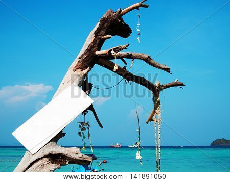 Coral sea shell and white wooden sign are hanging in timber branch at beautiful sea beach at Thailand.