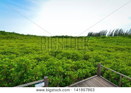 Golden Meadow Prong Tropical Forest from Thailand