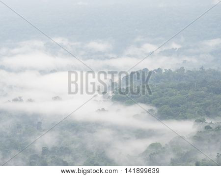 Nature landscape of mountain Mist with green plant in the morning at Pang Sida Sa Kaeo Thailand with soft focus