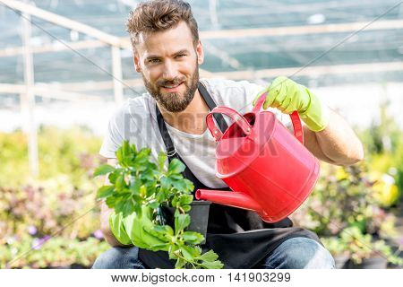 Handsome gardener in apron watering flowers with pink watering can. Worker taking care of plants in the hotbed