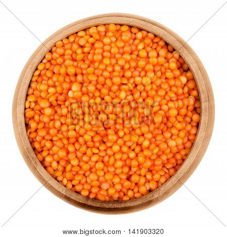 Red lentils in a wooden bowl on white background. Seeds of Lens culinaris, edible raw pulses of the legume family. Isolated close up macro photo from above.