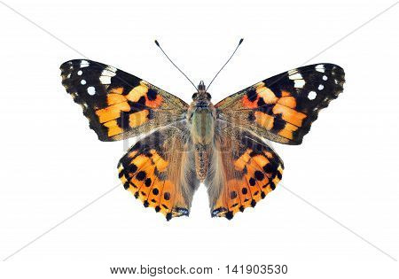 Painted lady butterfly isolated on white background