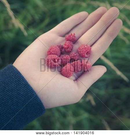 Retro Style Healthy Eating Concept Image Of A Child Holding Some Wild Raspberries