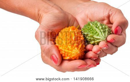 yellow and green momordica in hand isolated on white background.