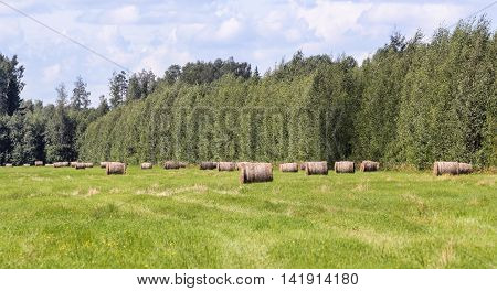 Rolls of hay in the forest field. Hay bales in a twisted forest fields.