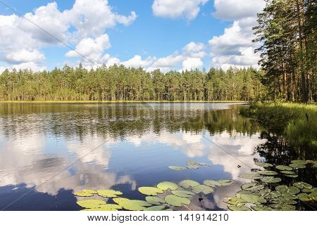 Beach Forest Lake. Cumulus clouds over the forest lake water.