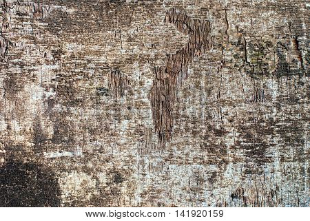 Shabby Wooden Panel Plywood Textured Background