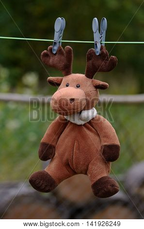 Elk toy hangs on the rope for drying