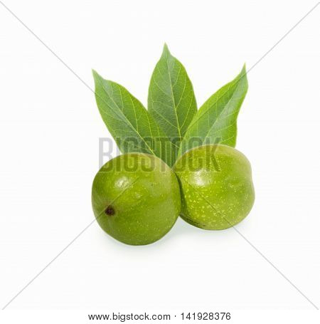 Walnut isolated on white background. Green young walnut in shell.