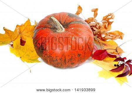 Red ripe pumpkin with autumn leaves. Isolated on white background