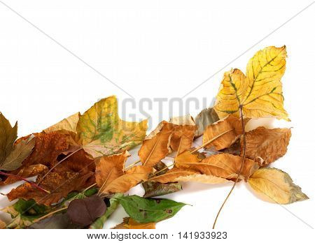 Autumnal Dried Leafs