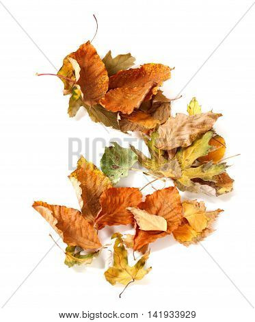 Autumn dried leafs isolated on white background. View from above.