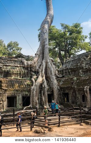 ANGKOR WAT CAMBODIA - JANUARY 27 2015: Unidentified tourists at Ta Prohm temple in Angkor Wat. Angkor Wat is the largest Hindu temple complex and religious monument in the world