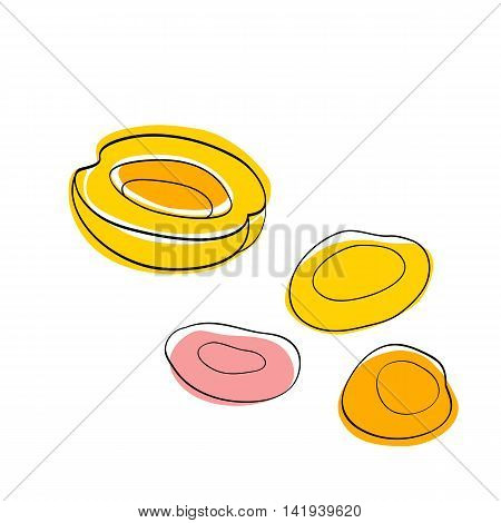 Vector set Yellow half apricot and dried apricots