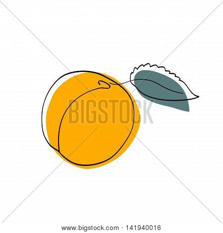 Vector illustration Dark yellow apricot with leaf