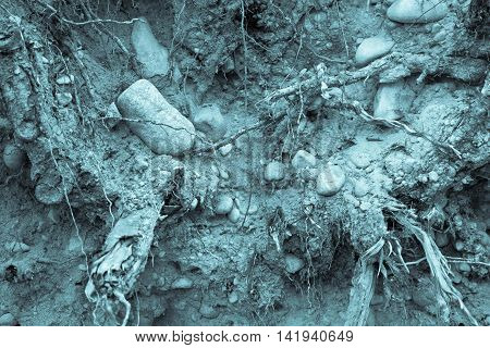 old soil with stones and with plant roots for a natural abstract background of monochrome blue tone