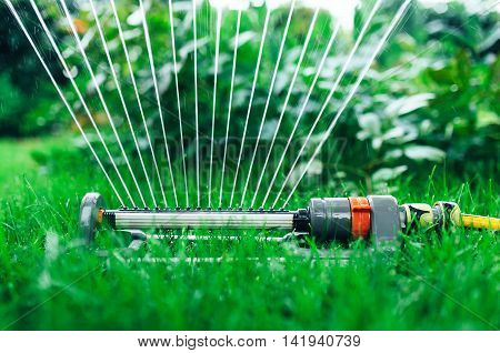 Sprinkler watering the garden, close up photo.