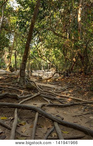 Rainforest at sunny day in Cambodia south-eastern Asia