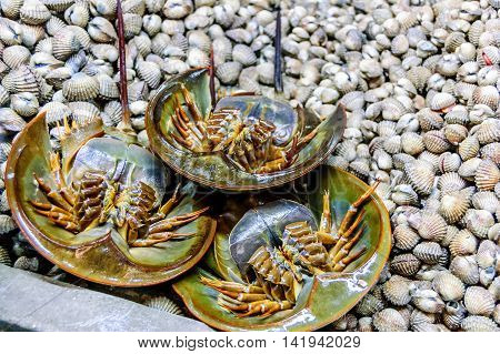 Horseshoe crabs & shellfish on stall in Krabi town morning market, southern Thailand