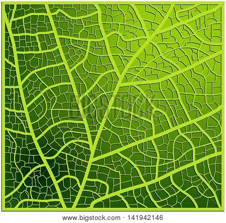Leaf Texture, Veins Vector Background Design. Beautiful Illustration Ready To Use