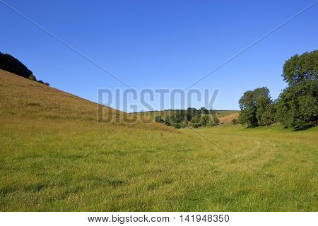 a green grazing meadow for livestock with hills trees and hedgerows under a blue sky in summer