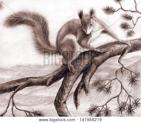 Pencil drawing squirrel on a pine branch