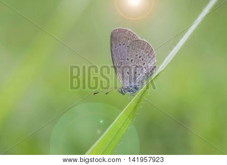 Brown butterfly perched on green grass a.
