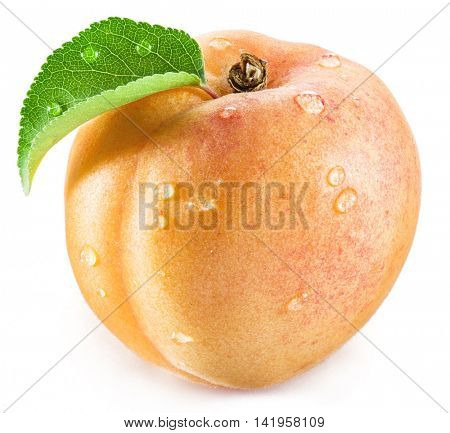 Apricot fruit with leaf and water drops on it on the white background.