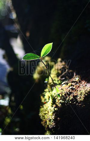 Small germinated tree in the forest show lifes, growing and hope