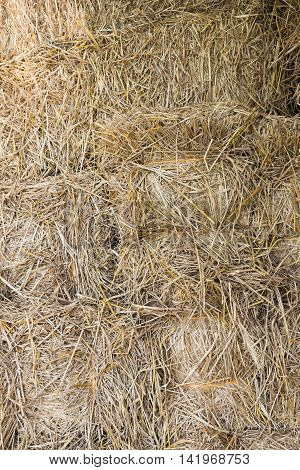 Dry yellow hay close up texture Background