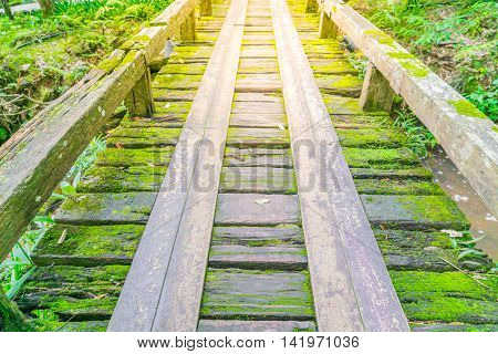 Wooden bridge in tropical green forest covered with  moss