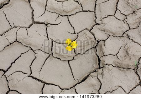 The split in the earth, crack, natural phenomenon, natural material. Let the earth and the origin of life