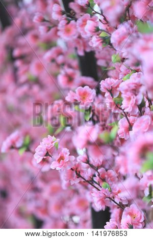 Artificial Pink cherry blossoms (Sakura Flower) in place decorations festive Japanese cuisine foods.