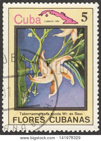 MOSCOW RUSSIA - CIRCA MAY 2016: a post stamp printed in CUBA shows Tabernaemontana apoda flower the series