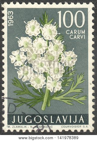 MOSCOW RUSSIA - CIRCA MAY 2016: a post stamp printed in YUGOSLAVIA shows a Carum carvi flower the series