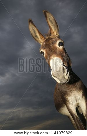 Portrait of Funny donkey on cloudy day
