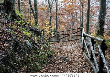 Hiking path with railing in the autumn deciduous forest. Seasonal natural scene. Tourism theme. Beautiful place. Vibrant colors.