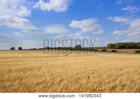 Flowing Barley Crop