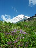 picture of heliotrope  - View of Mount Baker as seen from Heliotrope Ridge - JPG