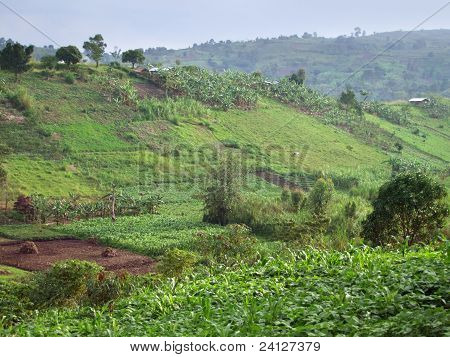 Agricultural Scenery Near Rwenzori Mountains