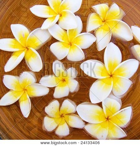 Flor de Plumeria Frangipani flores