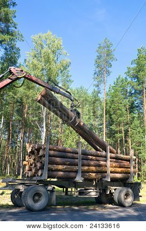 Shipping timber