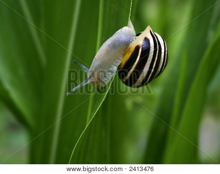 Snail On Edge