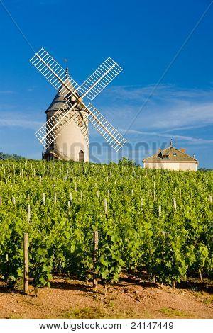 vineyards with windmill near Ch?nas, Beaujolais, Burgundy, France