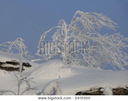 snowdrifts