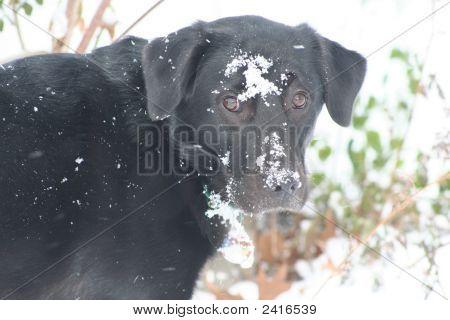 Doggie Snowball Fight